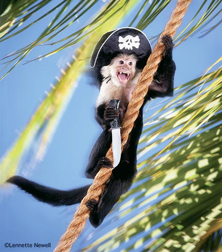 Hollywood Animals Trained Panthers For Film Tv Events: Trained Monkeys, Chimps And Primates For Film, Television