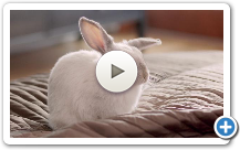 Norton / Rabbit / Internet Security